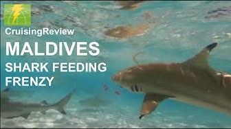 MALDIVES SHARK FRENZY: Shark Feeding